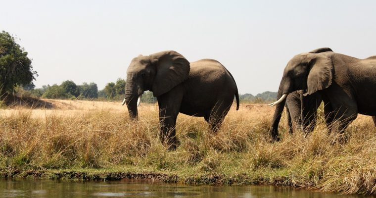 [ECO]: World Elephant Day – 12 August 2018